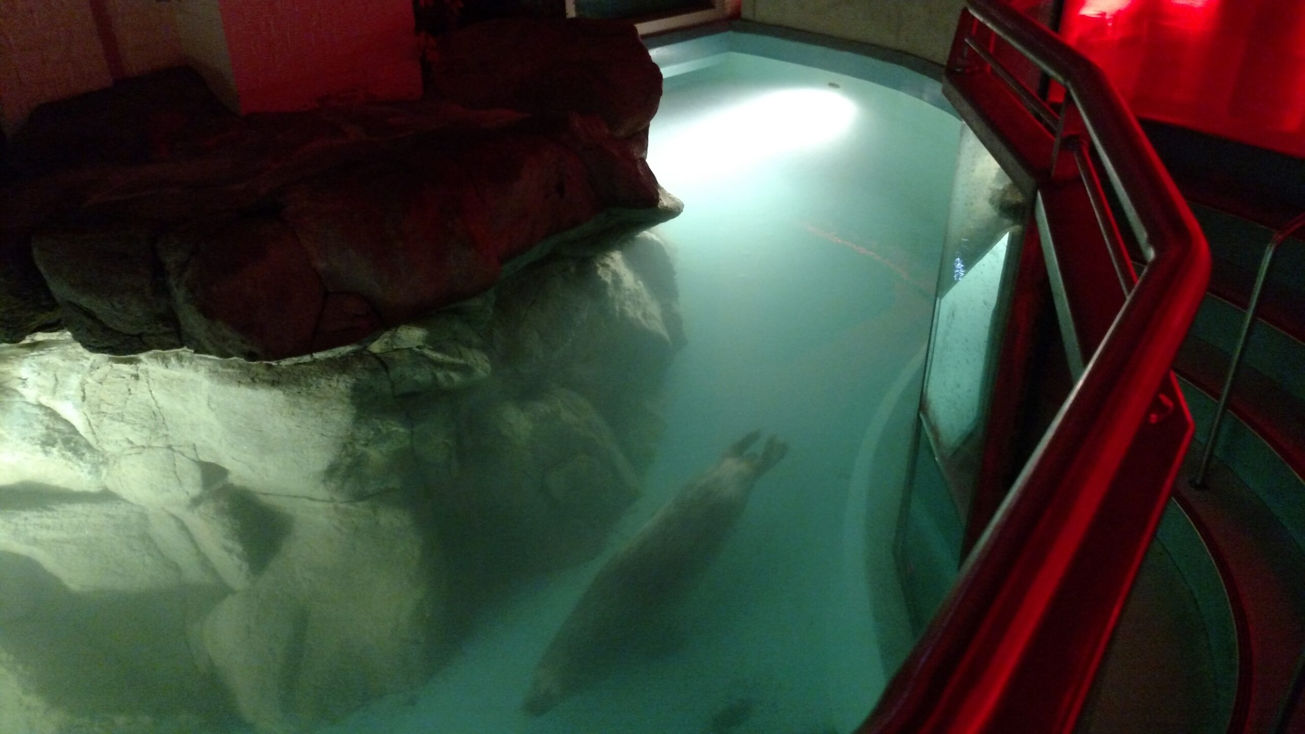 Maritime Aquarium Holiday Parties Norwalk Seal Tank